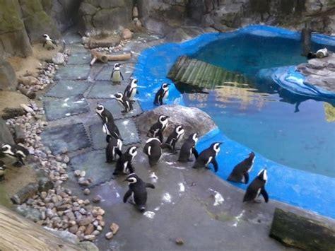Pingüinos: fotografía de Zoo Aquarium de Madrid, Madrid ...
