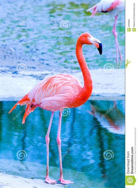 pink flamingo blue   Google Search | Flamingo photo ...