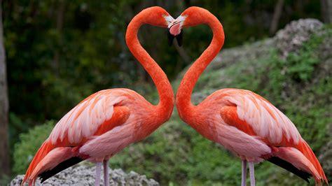 Pink flamingos with heart shaped necks, Miami, Florida ...