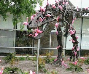 Pink Rex | Flamingos, S. a, Fotos