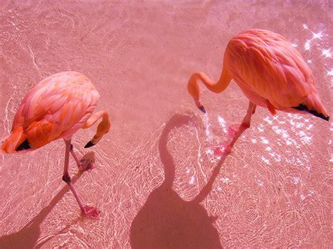 Pinky Flamingo Love | macymarie