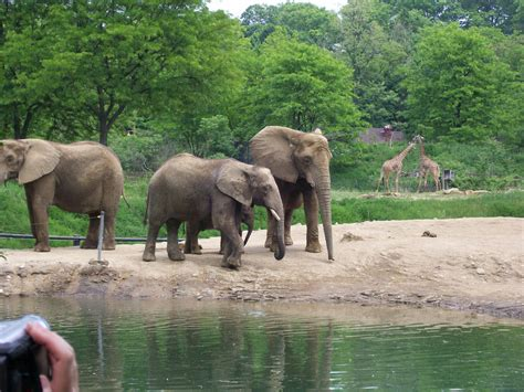 Pittsburgh Zoo by PAZ002 on DeviantArt