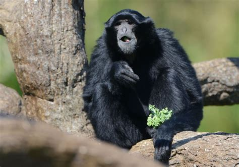 Pittsburgh Zoo disqualified for six figure state grant ...