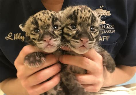 Pittsburgh Zoo introduces its newest family members    2 ...