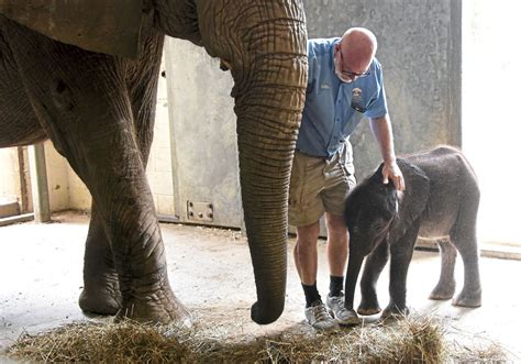 Pittsburgh Zoo sought to import 28 African elephants ...