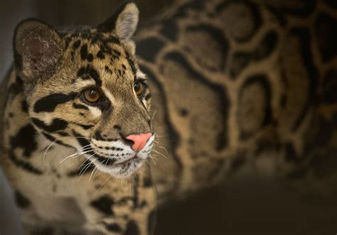 Pittsburgh Zoo to unveil new exhibit for endangered ...