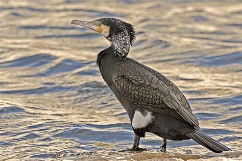 Pitu Rovirosa: Aves Marinas en el Mediterraneo