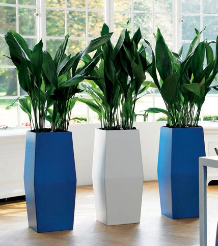 Placed In Indoor Plant Pots Add the Natural Beauty of Any ...