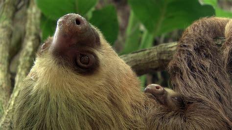 PLANETA AGUA   Documental Naturaleza HD 1080p   Grandes ...