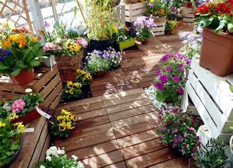 Plant Breeding balcony – beautiful flowers combined in ...