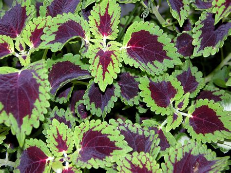 Plant some of these beauties for great garden color, even ...