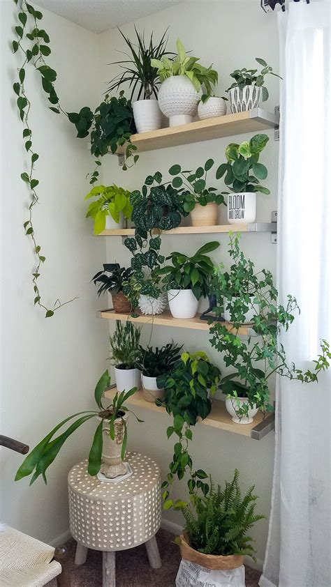 Plant wall, houseplants, decorating with plants, plant ...