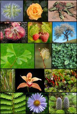Plantae   Wikipedia, la enciclopedia libre