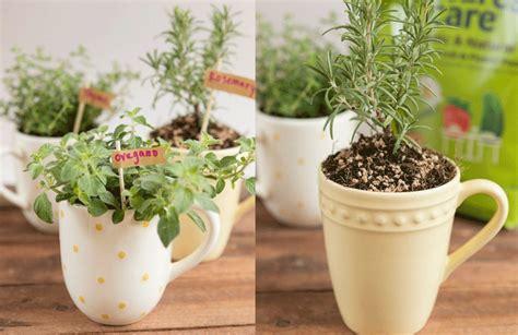 Plantar hierbas aromáticas en tazas: ideal para tener una ...