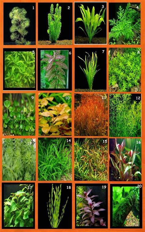 plantas acuaticas | Plantas acuaticas, Plantas acuaticas ...