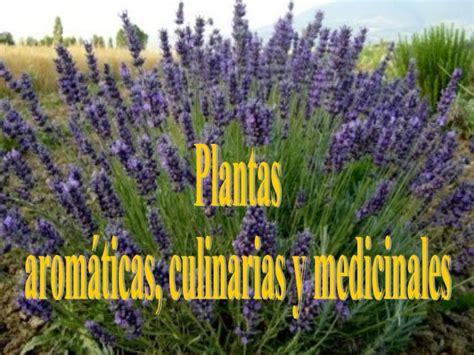 Plantas aromáticas, culinarias y medicinales