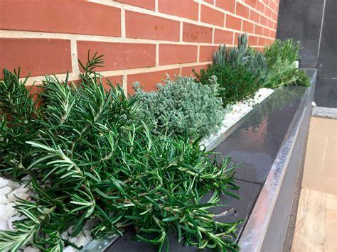 Plantas aromáticas de exterior   Plantesdecor