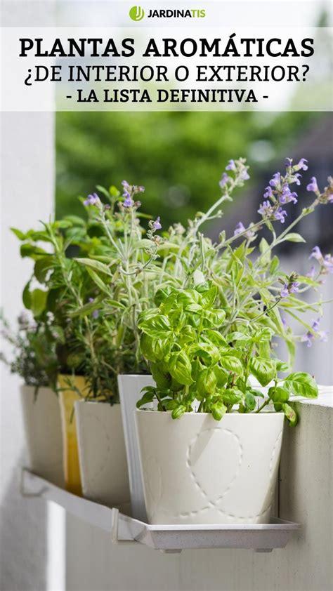 Plantas aromáticas de interior y exterior   Jardinatis ...