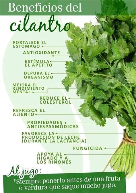Plantas aromáticas en 2020 | Hierbas curativas, Frutas y ...