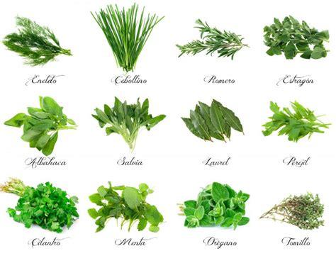 Plantas aromáticas en la cocina • deulonder.com