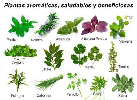 Plantas aromáticas en la Sierra de Cádiz