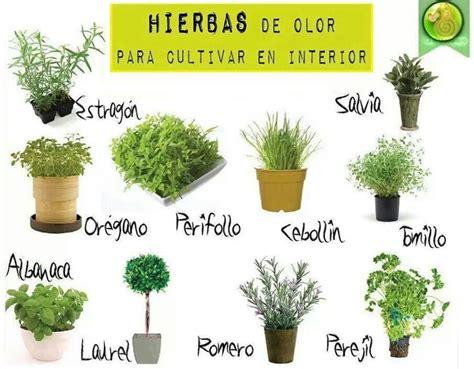 plantas aromaticas | Jardín de hierbas, Plantas ...