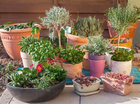 Plantas aromáticas para sembrar en casa