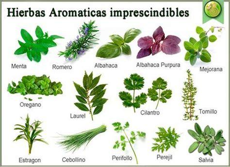plantas aromaticas   Pesquisa do Google | Plantas ...