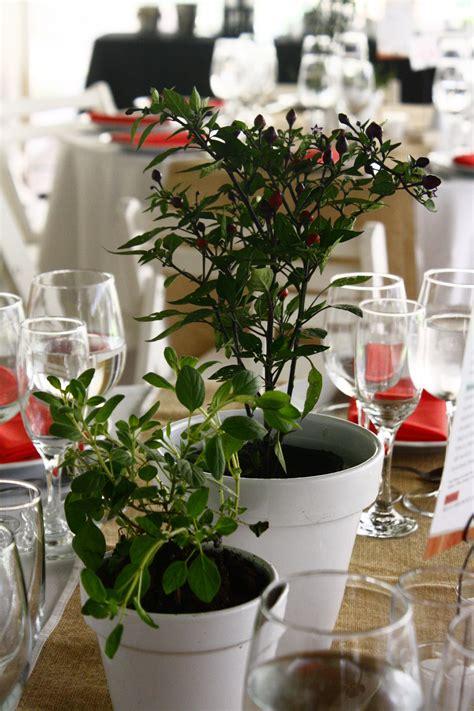 Plantas aromáticas.   Plantas, Planta aromatica, Eventos