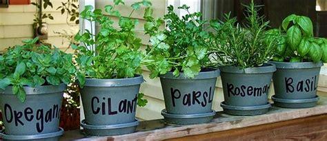 Plantas aromáticas puertas adentro