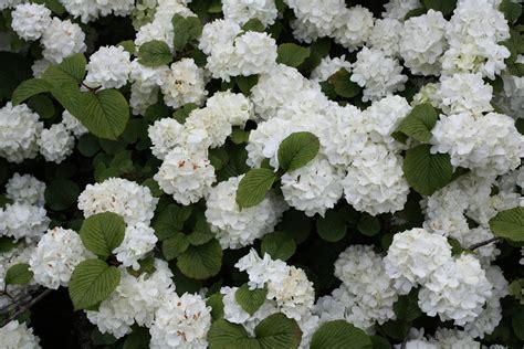 Plantas Aromáticas Que Irão Perfumar seu Jardim Todo o Ano ...