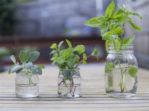Plantas arómaticas que no deben faltar en tu cocina