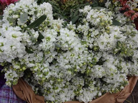 Plantas Aromáticas Que Perfumarán Tu Jardín todo el Año ...
