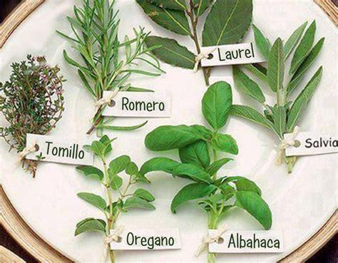 » Plantas Aromáticas y sus Propiedades | Plantas ...