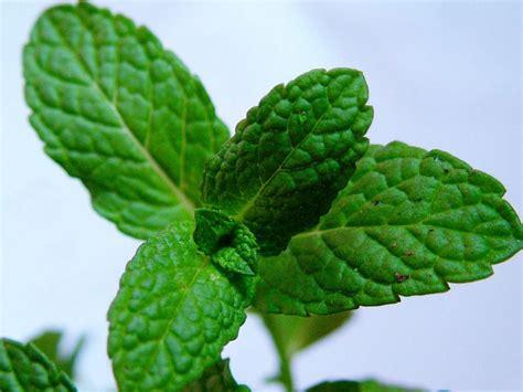 Plantas: beneficios medicinales | Plantas