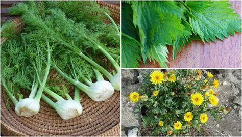Plantas comestíveis que você não conhecia   Melhor com Saúde