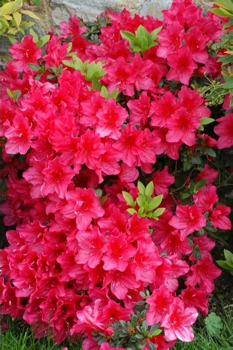 Plantas Con Flor Todo El Año De Exterior   Compartir Flores