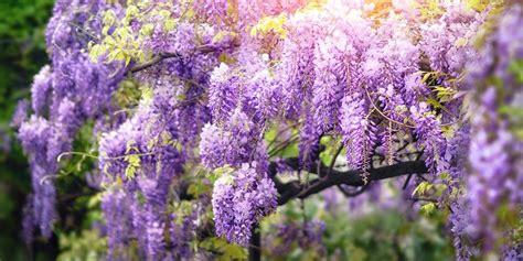 Plantas Con Flor Todo El Año Exterior   Compartir Flores