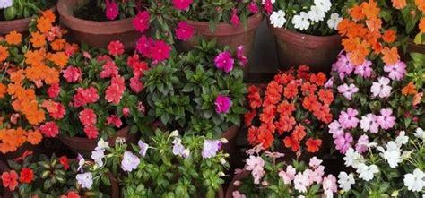 Plantas con flores durante todo el año   e Consejos ...