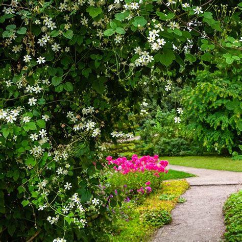 Plantas de exterior: 10 trepadoras con flor ideales para ...