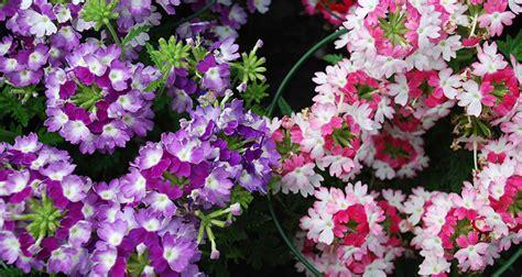 Plantas de Exterior Con Flor