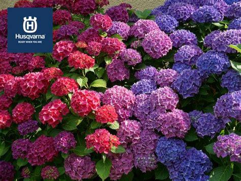 Plantas De Exterior Con Flor Todo El Año   Compartir Flores