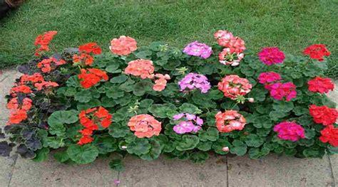 Plantas de exterior que florecen durante todo el año