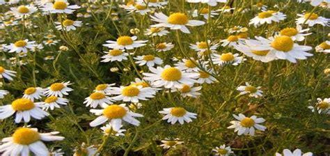 Plantas de exterior resistentes al sol directo