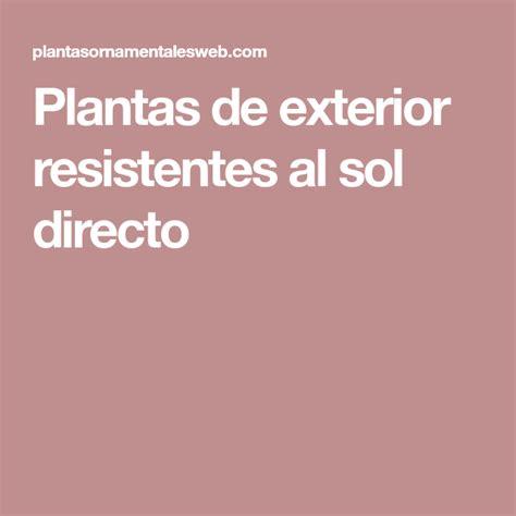 Plantas de exterior resistentes al sol directo | Plantas ...