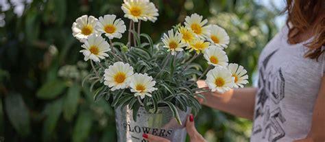 Plantas de exterior resistentes al sol y al viento   Blog