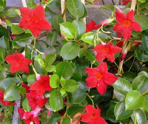 Plantas de floristeria la plaza: Plantas de exterior