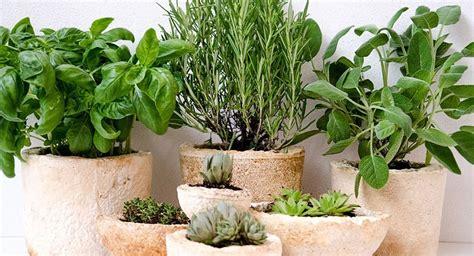 Plantas De Hierbas Aromaticas Ideal Macetas Cocinas O ...