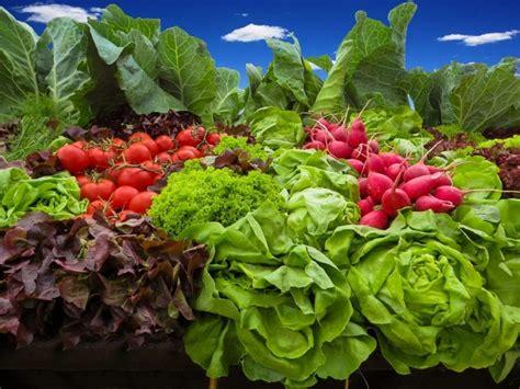 Plantas de hortalizas perennes   Cómo cultivar hortalizas ...