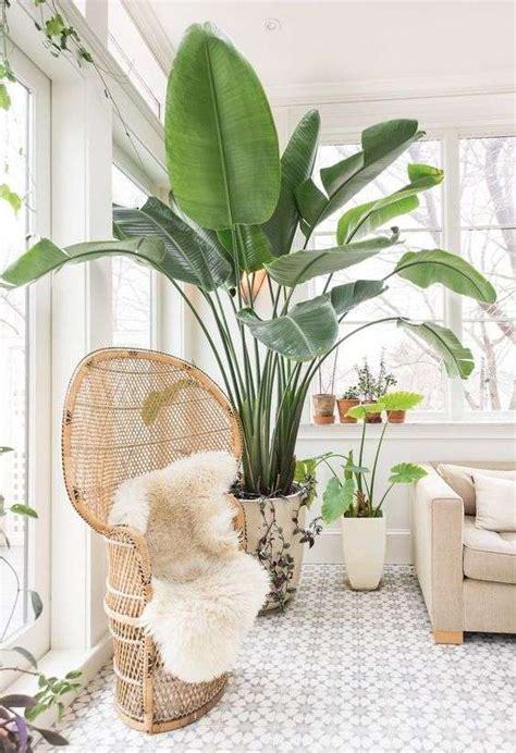 Plantas de interior: Cómo decorar con plantas [FOTOS ...
